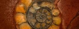 Nautilus Shell by cbenjasuwan ID-10095165